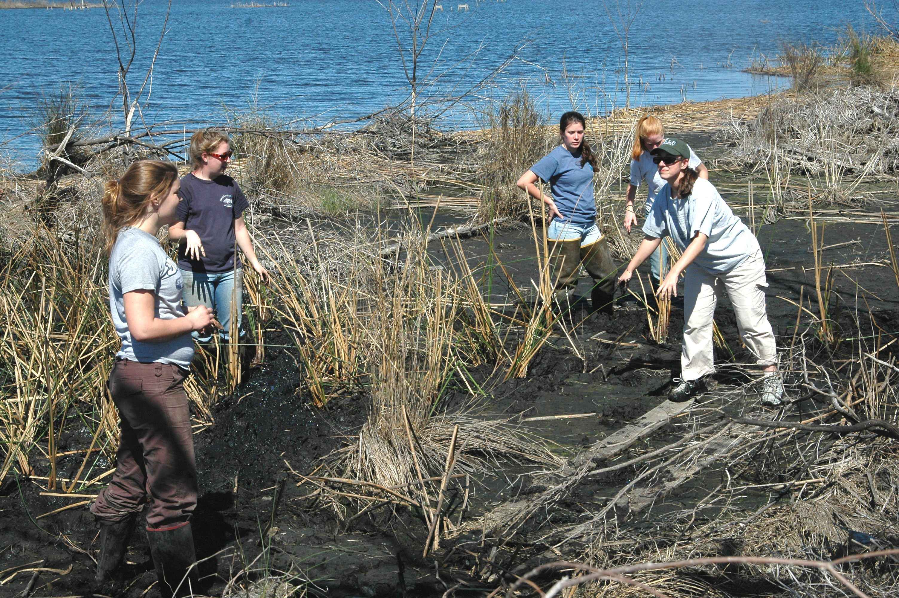 a-group-of-women-volunteers-helping-to-replant-marsh-grass-on-the-refuge